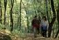 Wandern im Wienerwald (Parapluiberg)